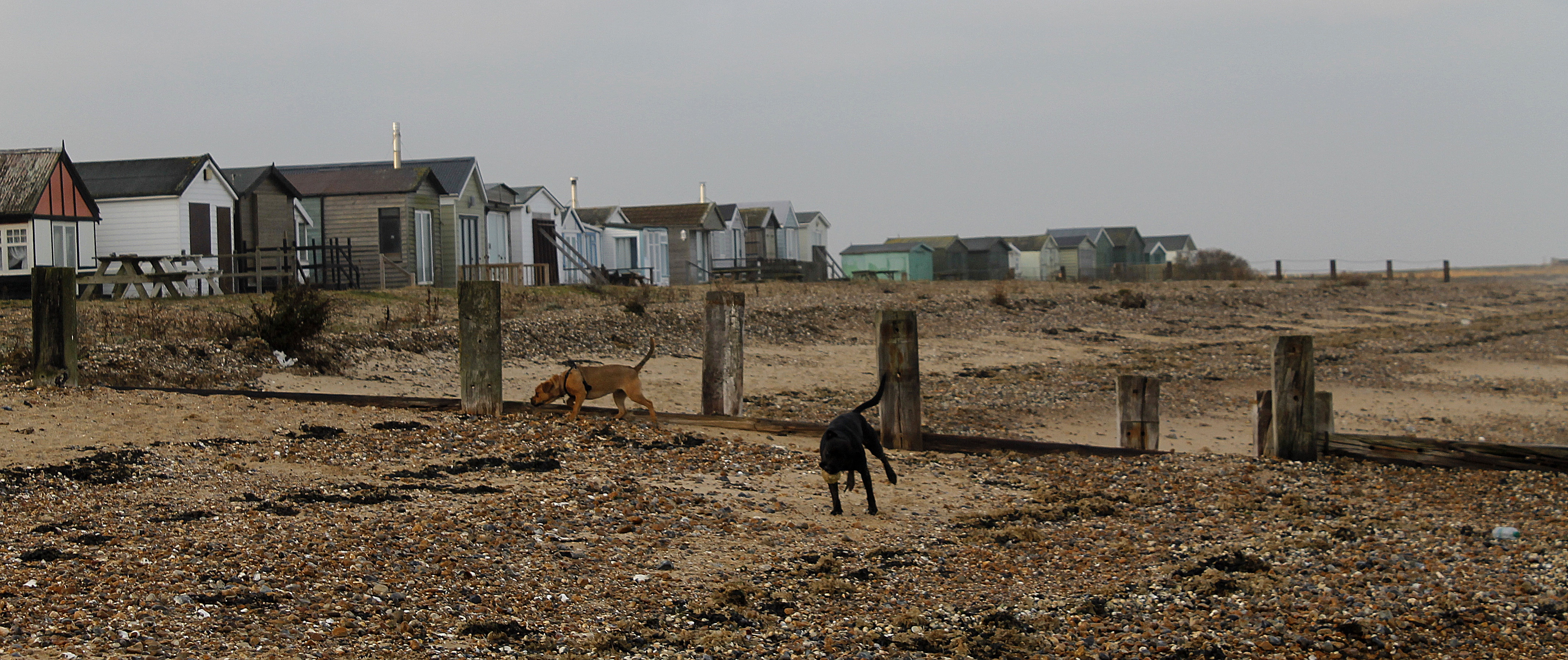 dogs-and-huts